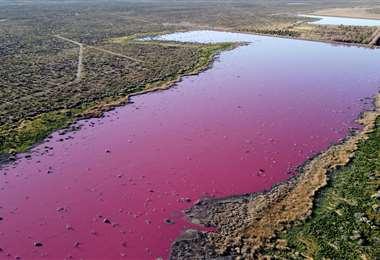 Lago rosa por contaminación