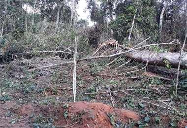 Los desmontes van rumbo a las 150 hectáreas