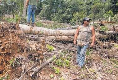 Varias organizaciones denunciaron el desmonte ilegal de parques naturales