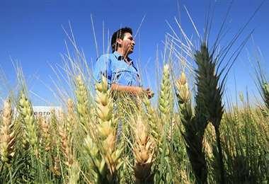 El Gobierno valora el aporte de los pequeños productores (Foto: Internet)