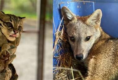 Ambos animales están bajo observación /Foto: Gobernación