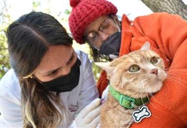 Vacunación de gatos en La Paz/Foto: APG Noticias
