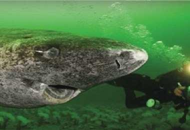 El estudio también supone un hito en los programas de conservación de esta especie