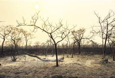 Superficie quemada en el ANMI San Matías es casi la misma que hace dos años