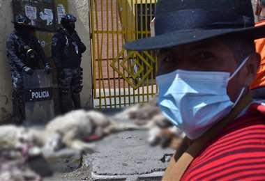Comunarios protestaron y cargaron a cuestas a los animalitos muertos /APG