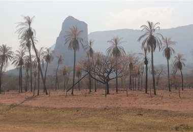 La región chiquitana es ganadera y es la más afectada por la sequía